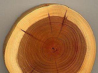 Despre lemn - nu numai de bine