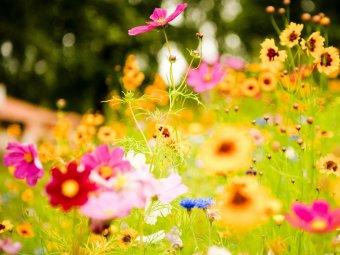 Flori cu nume de vedeta