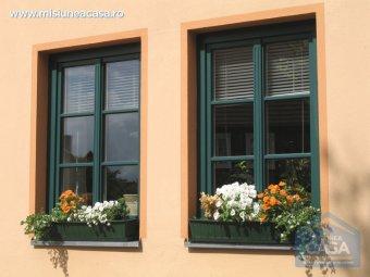 Petunii puse in dreptul unor ferestre de apartament.