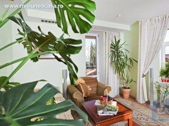 ingrijire plante apartament
