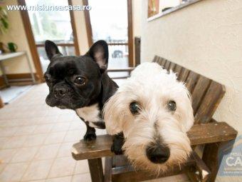 doi caini in casa - sanatatea casei cu animale