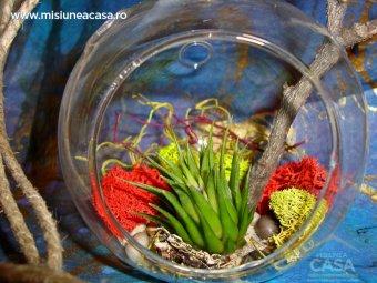 Terariul - gradina miniaturala incadrata de sticla