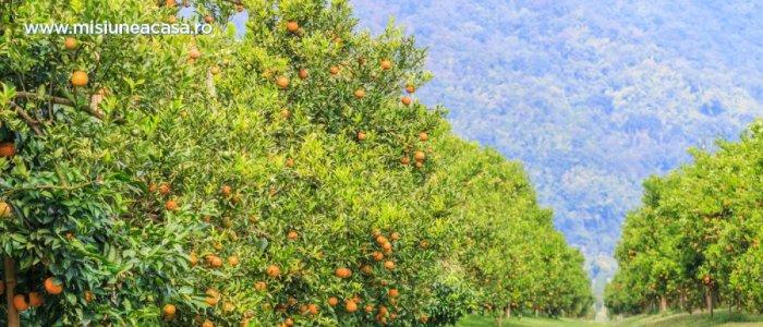 7 reguli de ingrijire a pomilor fructiferi