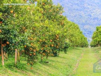 Livada cu pomi fructiferi
