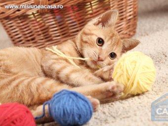 Pisica care se joaca cu niste ghemuri