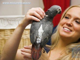 Ingrijirea papagalului