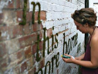 Graffiti cu muschi