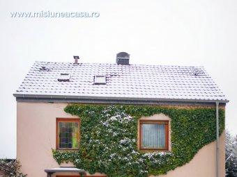 Iedera pe casa in mijlocul iernii