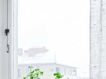 Ingrijirea plantelor iarna