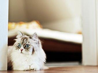 Pisica care sta pe canapea in casa