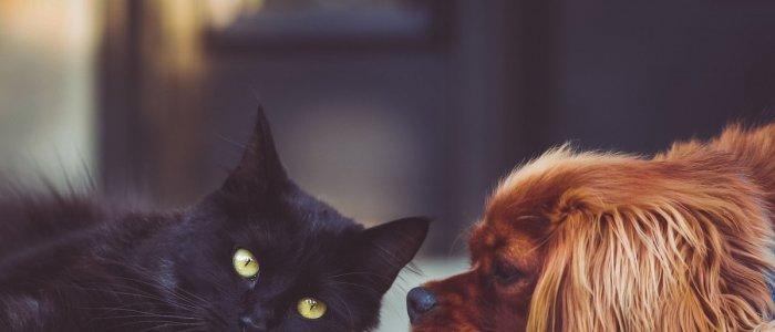 Caine sau pisica? 4 beneficii ale animalelor de companie!