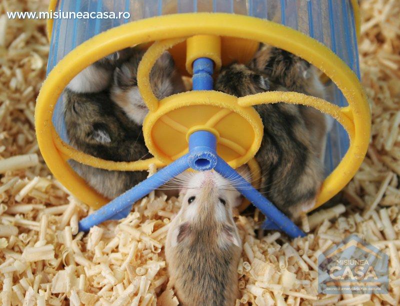 Jucarii pentru hamsteri