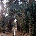 Irigatii si agricultura in desert