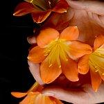Floarea de iarna care iti bucura primaverile