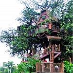 Locuinte moderne construite in copaci