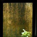 Plantele - sufletul casei