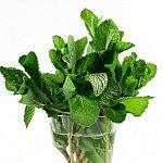 Propriul furnizor de plante aromatice
