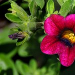 10 plante comestibile si decorative care alunga daunatorii