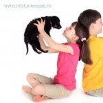 5 beneficii ale animalelor de casa