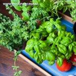6 plante de apartament pentru salatele de vara
