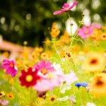 8 flori care poarta nume de celebritati