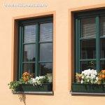 Cele mai indragite 5 flori de apartament