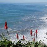 Cinci motive pentru a cumpara o Aloe Vera