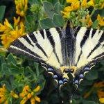 Cum atragem fluturii in gradina? 5 recomandari pentru o gradina primitoare