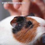 Cum sa protejam casa de animalul de companie
