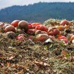 Ghidul gradinarului incepator : Cum se obtine compostul organic in gospodarie in 3 pasi