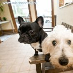 Mentinerea sanatoasa a casei chiar si cu animale de companie
