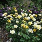 O gradina ingrijita poate ridica pretul proprietatii tale. Top 10 flori pe care sa le plantezi in gradina