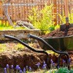 Pregatirea gradinii pentru vara