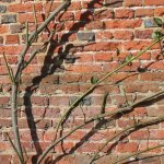 Protejarea trandafirilor cataratori pe perioada iernii