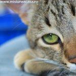 10 lucruri pe care nu le stiai despre pisici