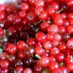 10 sfaturi utile despre alegerea si ingrijirea arbustilor fructiferi