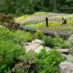 4 beneficii ale unui acoperis verde