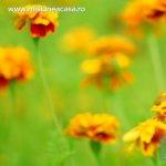 5 plante medicinale care nu trebuie sa lipseasca din gradina ta