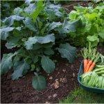 Amenajarea de toamna a gradinii (III) - 10 plante ce se pot cultiva toamna