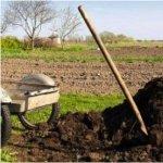 Amenajarea de toamna a gradinii (IV) - Fertilizarea organica si fertilizarea chimica