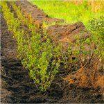 Amenajarea de toamna a gradinii (V) - Ingrijirea plantelor inaintea sezonului rece