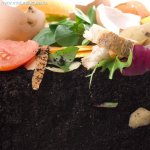 Ce este compostul si la ce este el bun