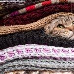 Ce trebuie sa stii atunci cand alegi o pisica drept animal de companie