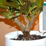 Cum sa-ti uzi plantele folosind telefonul mobil