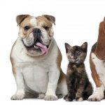 Cum scoti din casa mirosul animalelor de companie