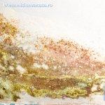 Efectele mucegaiului asupra sanatatii