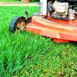Ghid de achizitionare a masinii de tuns iarba – partea 1