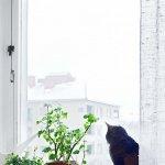 Intretinerea corecta a plantelor de apartament pe perioada iernii