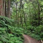 Nevoia de verde – 10 motive sa iesim cu familia in natura