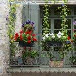 Orientarea balconului si plantele in ghiveci